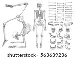 human anatomy drawing...