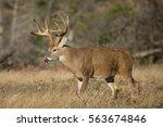 impressive whitetail deer buck...   Shutterstock . vector #563674846