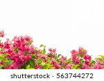Stock photo pink yarrow paper flower isolated 563744272