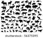 agility,animal,antler,background,badger,bear,bird,black,boar,carnivore,collection,deer,eagle,feather,fox