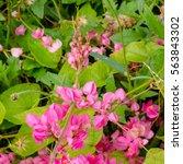 nature floral flower beautiful...   Shutterstock . vector #563843302