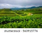 green tea hill plantation in... | Shutterstock . vector #563915776