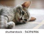 Stock photo lying kitten 56396986