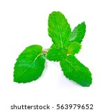 Fresh Mint Leafs Isolated On A...