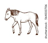 horse line art hand drawn... | Shutterstock .eps vector #564033706