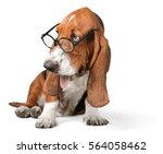 Stock photo dog 564058462