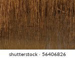 reflecton on river reeds - stock photo