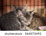 Stock photo two kittens cuddling and sleeping 564073492