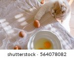 Stock photo the cat plays with eggs in the kitchen bright sunlight and abstract light spots from the window 564078082
