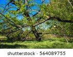 birdhouse | Shutterstock . vector #564089755