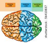 human brain top view | Shutterstock . vector #56410837