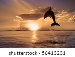 beautiful dolphin jumping up... | Shutterstock . vector #56413231