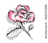 drawing pink rose on a light... | Shutterstock .eps vector #564151006