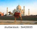 camel in front of taj mahal in... | Shutterstock . vector #56420035