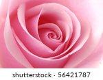 Stock photo beautiful pink rose close up 56421787