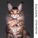 portrait of domestic... | Shutterstock . vector #564267016