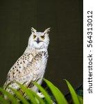 Portrait Owl On Green Background