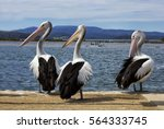 Pelicans Standing On A Pier In...