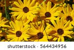 close up yellow and black... | Shutterstock . vector #564434956