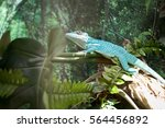 blue lizard on a branch | Shutterstock . vector #564456892