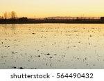 Rice Field In Sunset Light ...