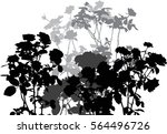 Stock vector illustration with black and grey rose flowers bush isolated on white background 564496726