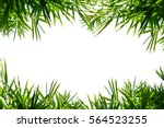 bamboo leaves frame isolated on ... | Shutterstock . vector #564523255