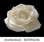 Stock photo white rose isolated on a black background 564596236