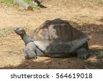 View At Galapagos Tortoise On A ...