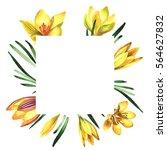 wildflower rose crocuses frame... | Shutterstock . vector #564627832