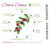 camu camu berry health benefits ... | Shutterstock .eps vector #564645358