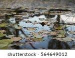 Beautiful Fallen Leaves In The...