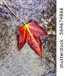 Single Wet Autumn Leaf  Bright...