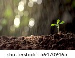 seedlings growing out of the... | Shutterstock . vector #564709465