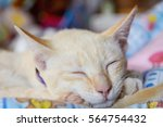 Stock photo cat and dog playing and sleeping 564754432