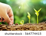 plant seed seedling and... | Shutterstock . vector #564774415