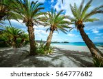 Scenic Landscape Of Palm Trees...