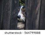 Stock photo dog 564799888