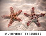 Red Starfish Resting On The...