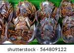 horseshoe crabs | Shutterstock . vector #564809122