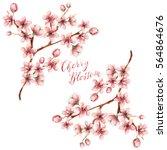 cherry blossom spring flowers...   Shutterstock . vector #564864676
