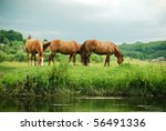 Horses Grazing - stock photo