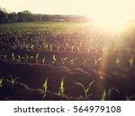 Sun Flair Across Farmers Field...