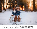 two dogs  hugging each other ... | Shutterstock . vector #564995272