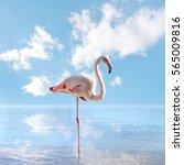flamingo in a lake | Shutterstock . vector #565009816