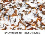 fallen leaves covered in snow | Shutterstock . vector #565045288