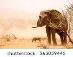 elephants | Shutterstock . vector #565059442