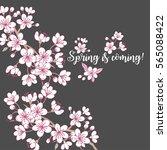 background with sakura. hand... | Shutterstock .eps vector #565088422