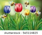 Bees Flying In The Tulip Garde...