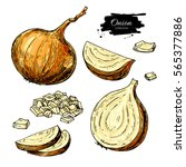 onion hand drawn set. full ... | Shutterstock . vector #565377886